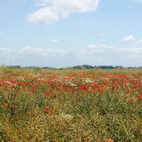Paysages sur la route de Calais